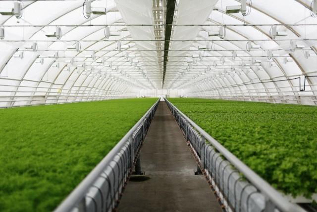 Estufa - Soluções Agrícolas