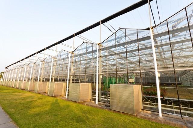 Construção Agrícola - Estufa