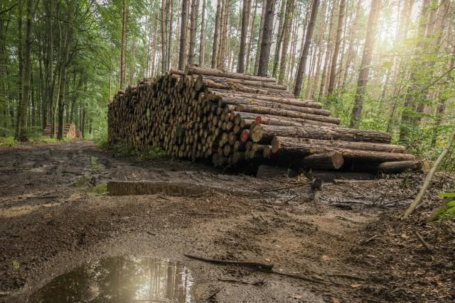 Limpeza de Florestas