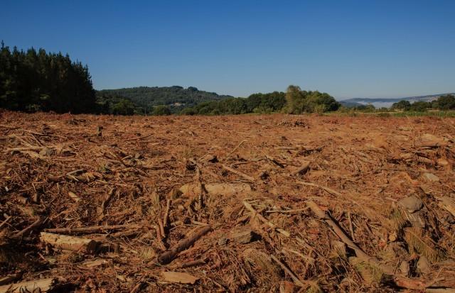 Limpeza de Mato e Floresta
