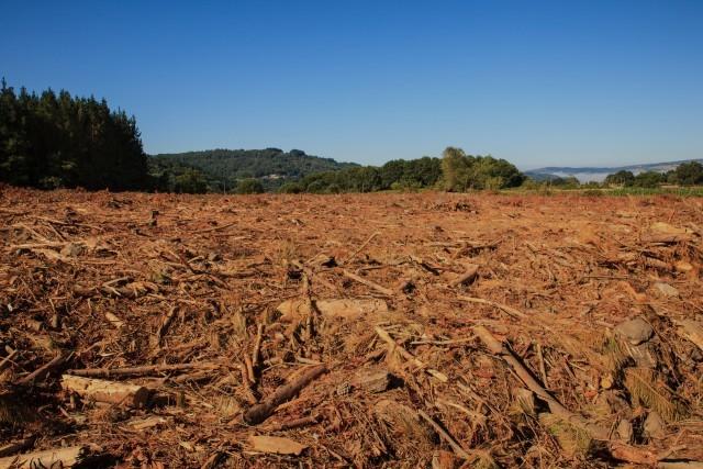 Soluções de Limpeza de Florestas